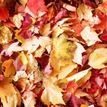 fall-leaves-small